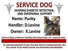 Service dogs add support